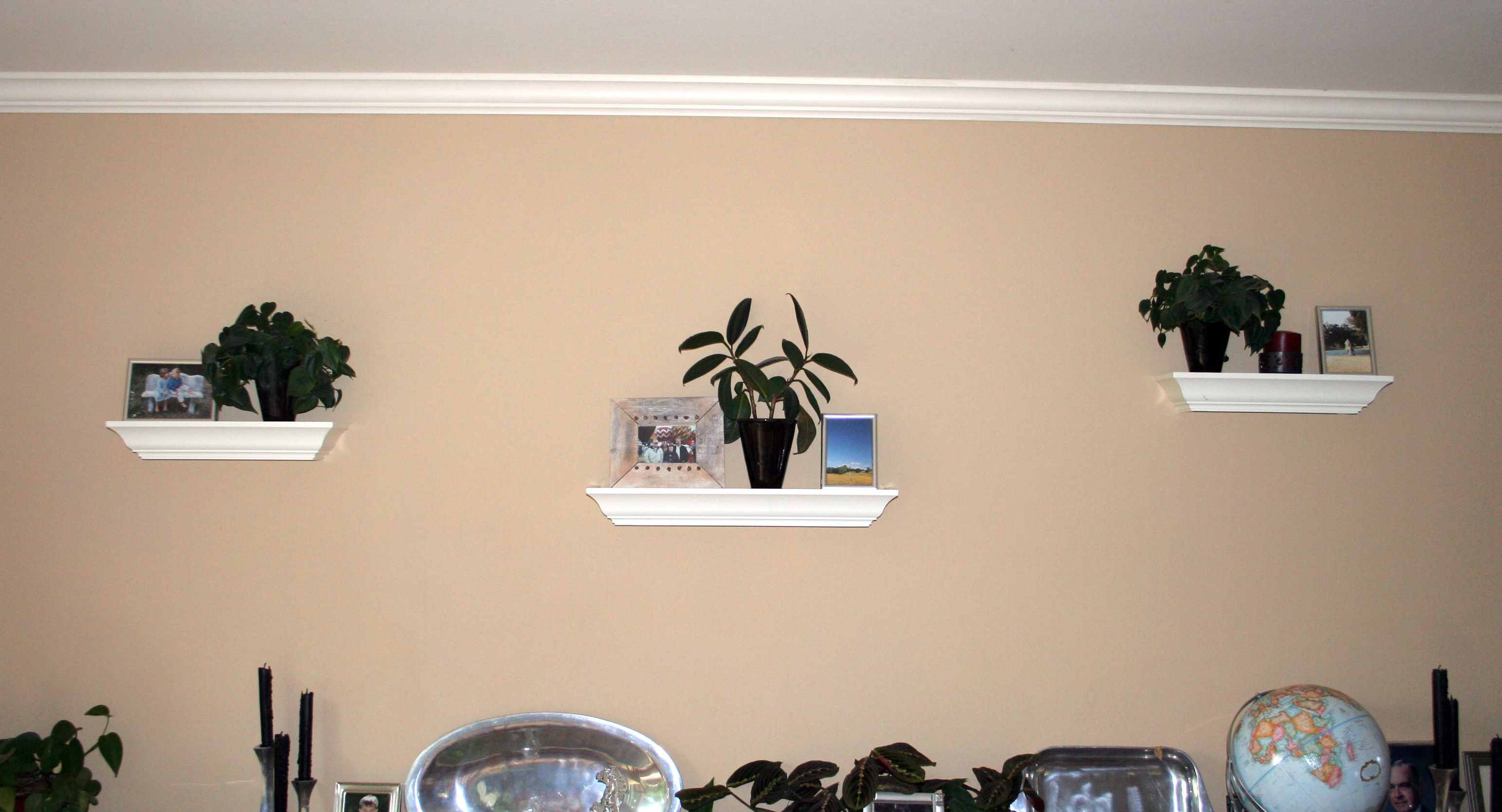 Decorating with House Plants | LiveBinders Blog