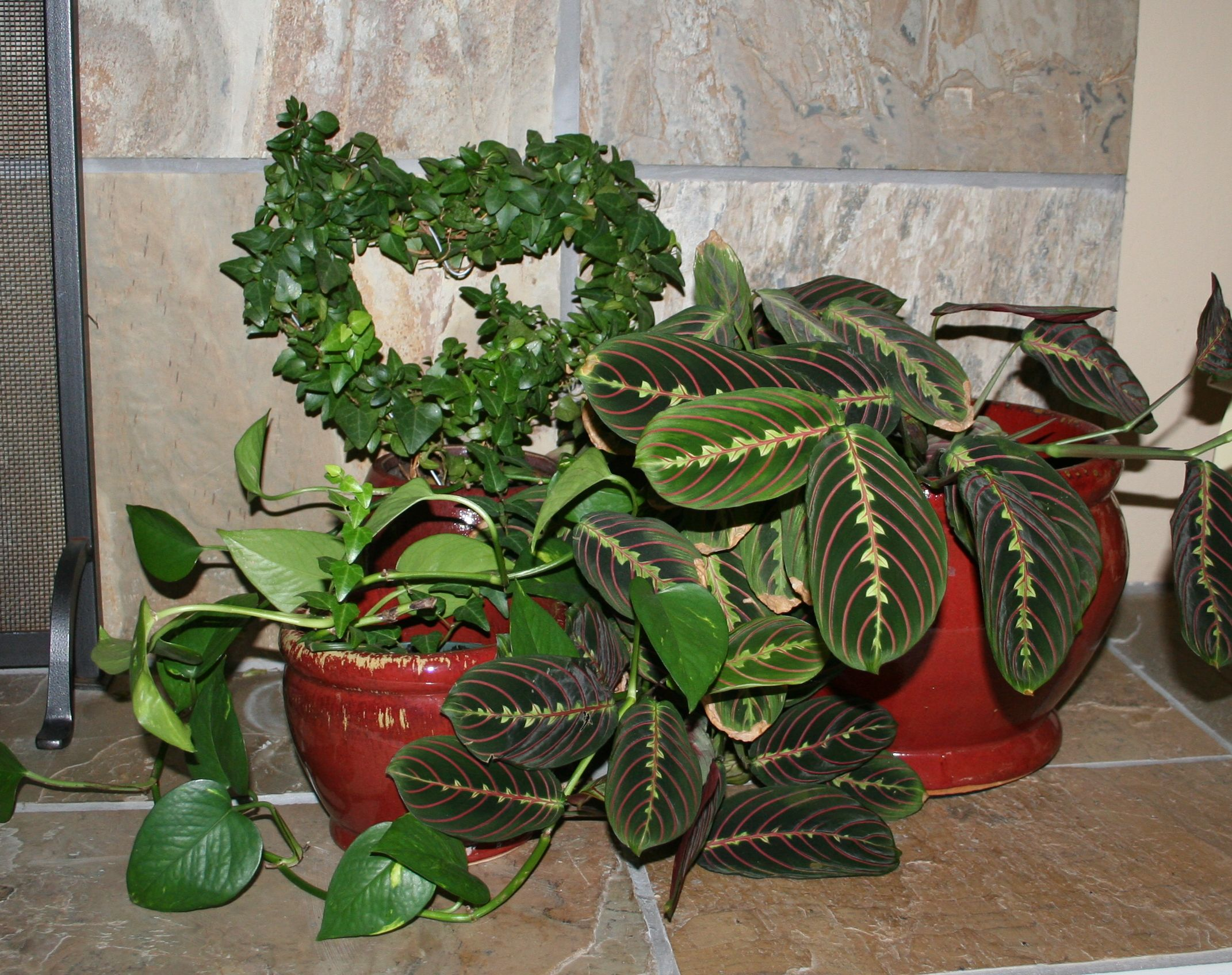 Decorating with house plants livebinders blog for Plant decorations home