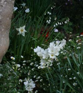 White bulbs in the garden